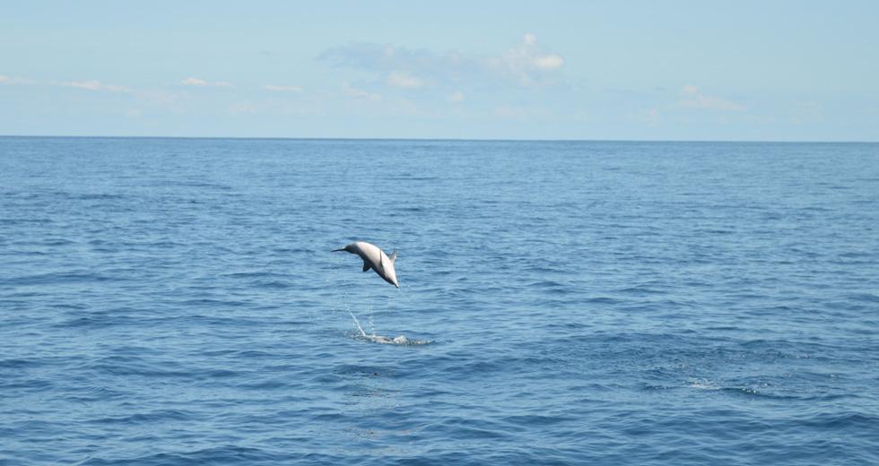 Nage avec les Dauphins à Nosy Be